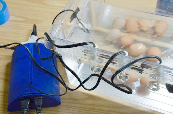 final eggs all