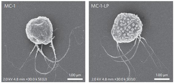 Nanobots Fight Cancerous-Cells