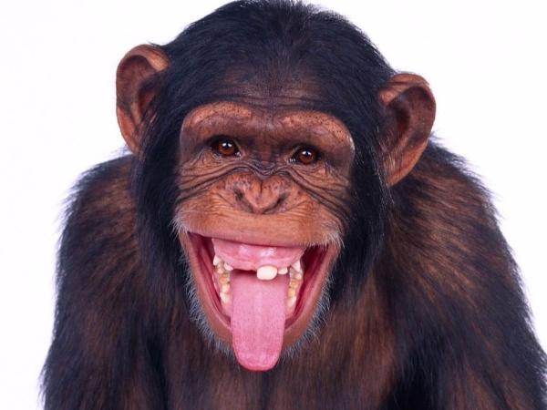 MonkeyDogTracker